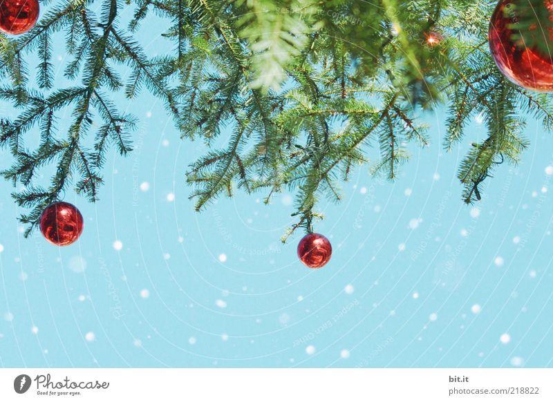 Schneeflöckchen... (III) Himmel Natur Weihnachten & Advent rot Winter Schneefall glänzend Eis Dekoration & Verzierung Frost Kitsch Tradition Weihnachtsbaum