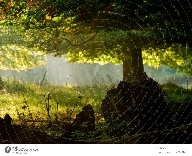 Natur grün schön Baum Sonne Blatt Wald gelb Farbe Herbst Umwelt Landschaft Gefühle Wege & Pfade Stimmung Park