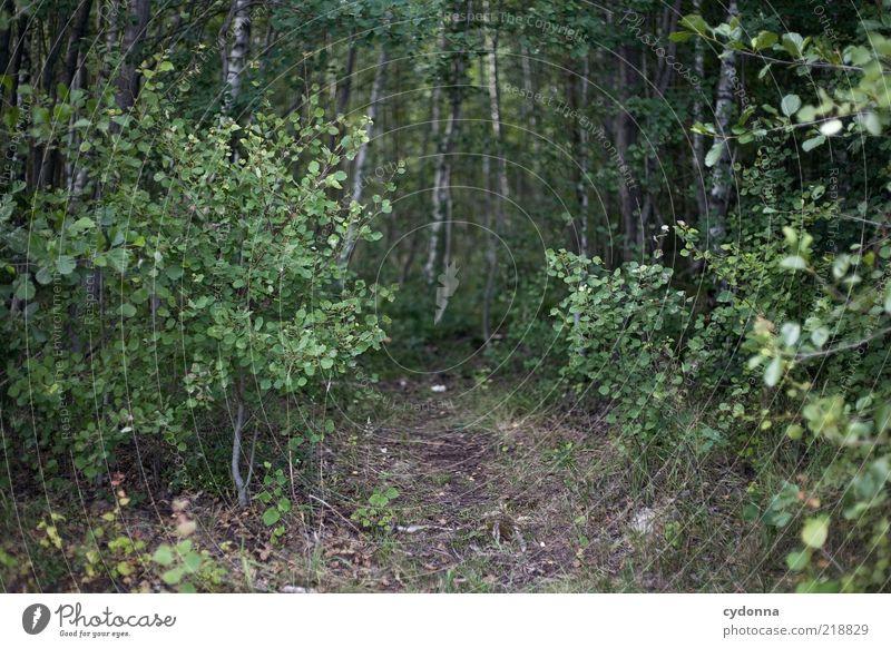 Stille Pfade ruhig Umwelt Natur Sommer Baum Sträucher Wald Wege & Pfade Einsamkeit geheimnisvoll Fußweg unheimlich Farbfoto Außenaufnahme Menschenleer