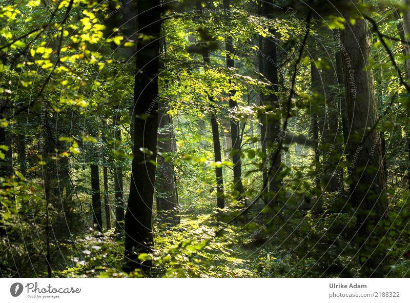Im Wald Natur Pflanze Sommer grün Baum Landschaft Erholung Blatt ruhig Herbst Innenarchitektur Ausflug Zufriedenheit leuchten glänzend