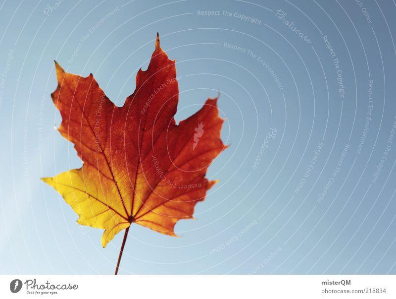 Herbstwind. Natur schön rot ruhig Blatt gelb Wind Wetter ästhetisch Wandel & Veränderung Vergänglichkeit Stengel Schönes Wetter wehen
