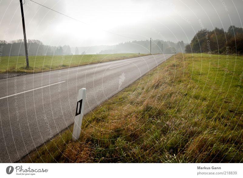 Landstraße im Herbst Natur Landschaft Klima Wetter schlechtes Wetter Nebel Gras Wiese Verkehrswege Straße braun grau Asphalt Kabel Pfosten Farbfoto