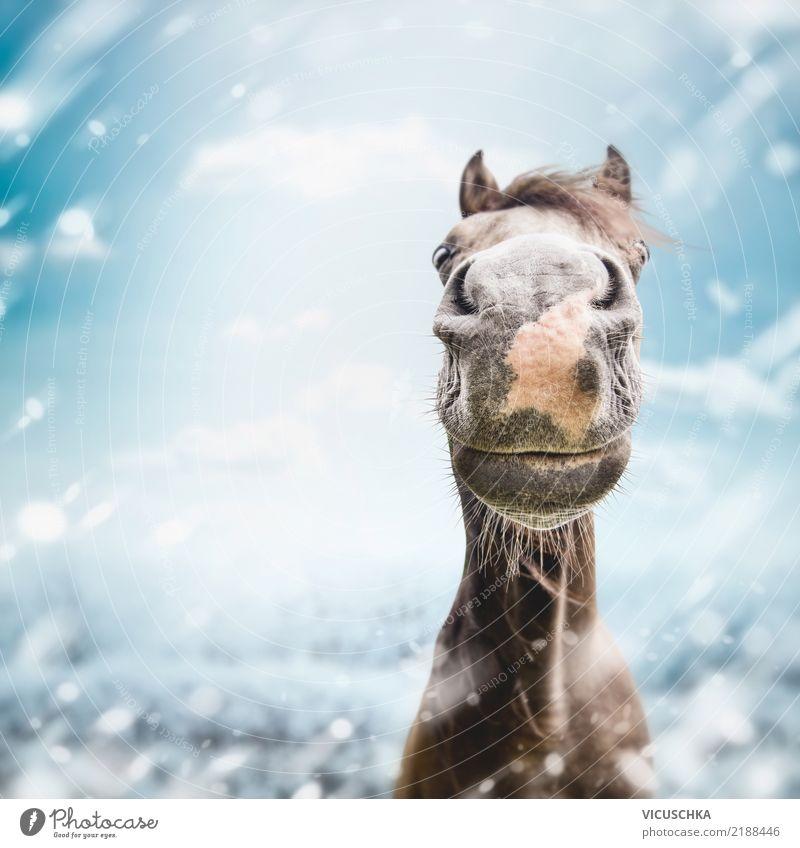 Lustiges Pferde Moppel im Winter Lifestyle Freude Natur Sturm Schnee Schneefall Tier Stimmung Lebensfreude Humor grinsen Farbfoto Außenaufnahme Nahaufnahme