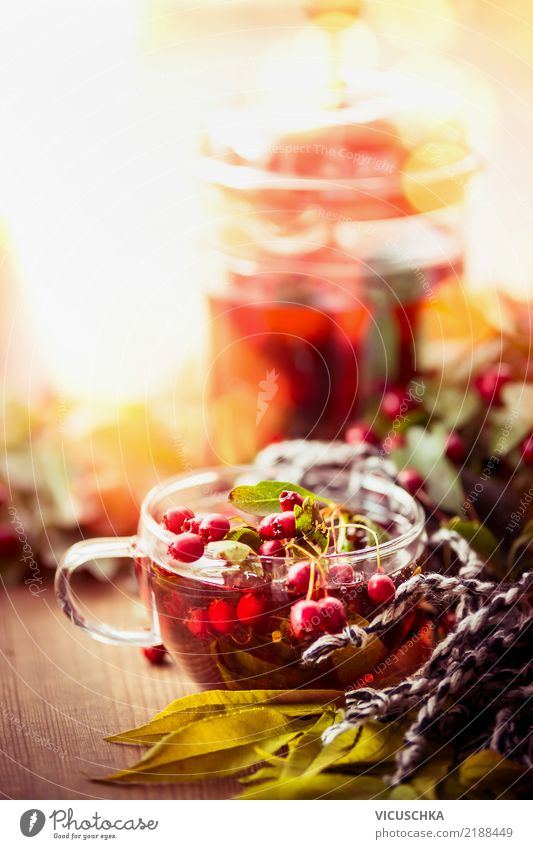 Herbsttag mit Tasse Tee Getränk Heißgetränk Stil Design Gesunde Ernährung Leben Häusliches Leben Natur Blatt Garten Gefühle Hintergrundbild Erkältung Schal