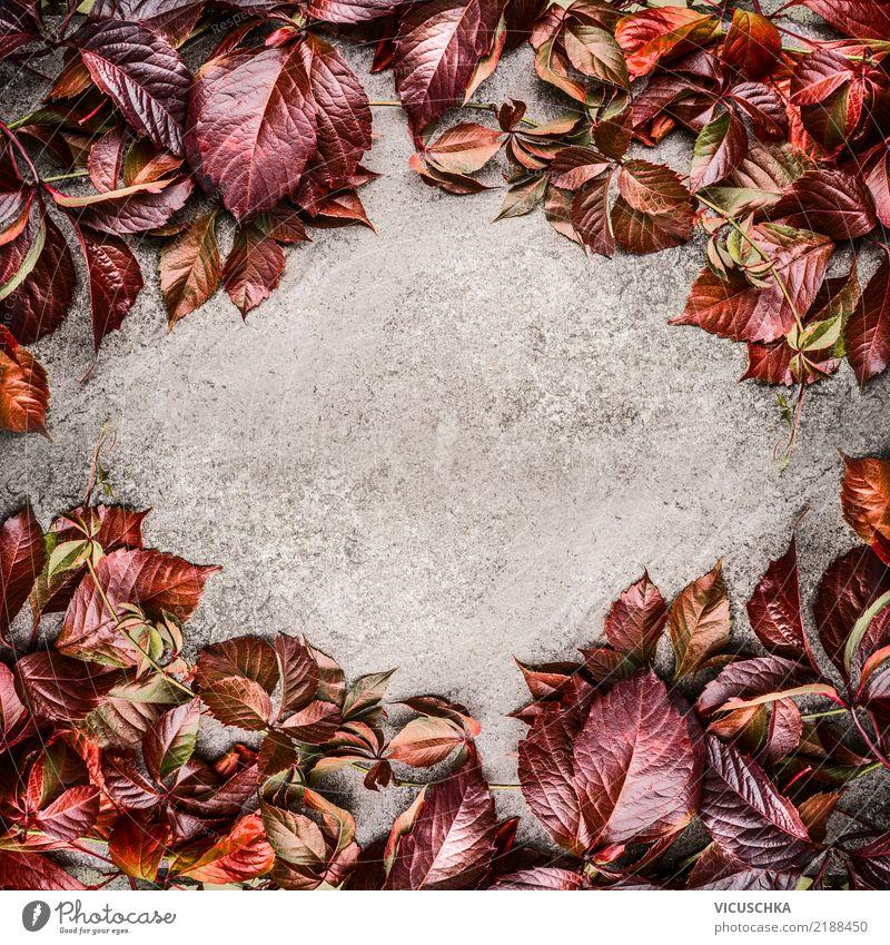 Rote Herbstlaub Rahmen Hintergrund Stil Design Dekoration & Verzierung Natur Pflanze Blatt retro gelb Hintergrundbild Grunge rot herbstlich Farbfoto