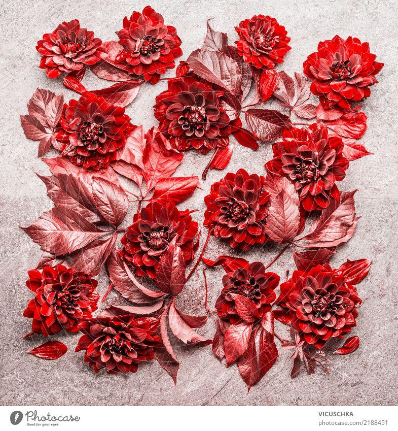 Herbst Blumen Composing Stil Design Leben Garten Natur Pflanze Blatt Blüte Dekoration & Verzierung Blumenstrauß Zeichen gelb rot Dahlien schön Stillleben