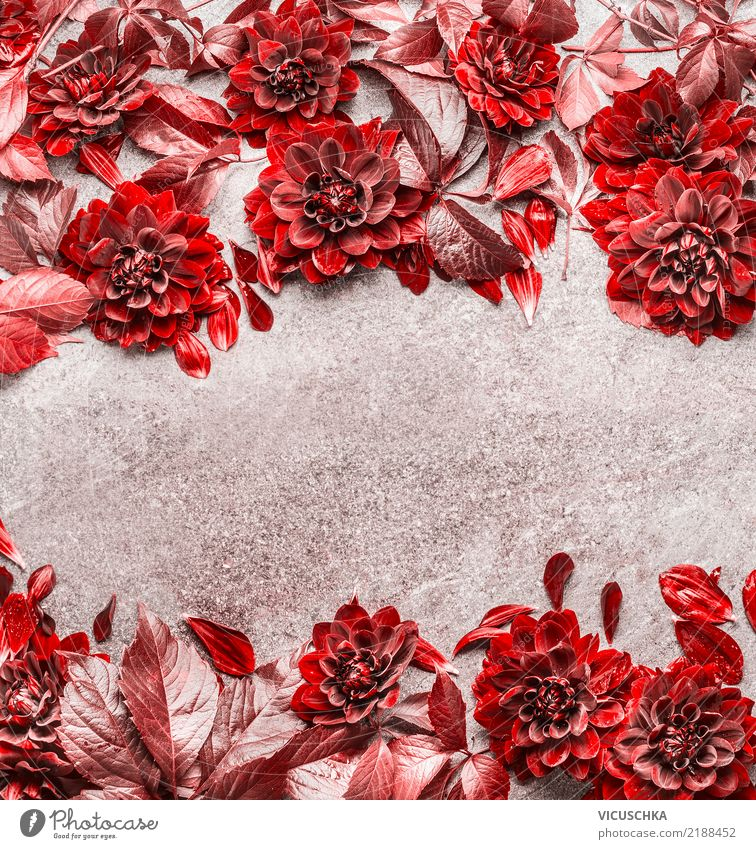 Rote Herbstblumen und Blätter Rahmen Stil Design Feste & Feiern Natur Pflanze Blume Blatt Blüte Dekoration & Verzierung Blumenstrauß gelb Hintergrundbild