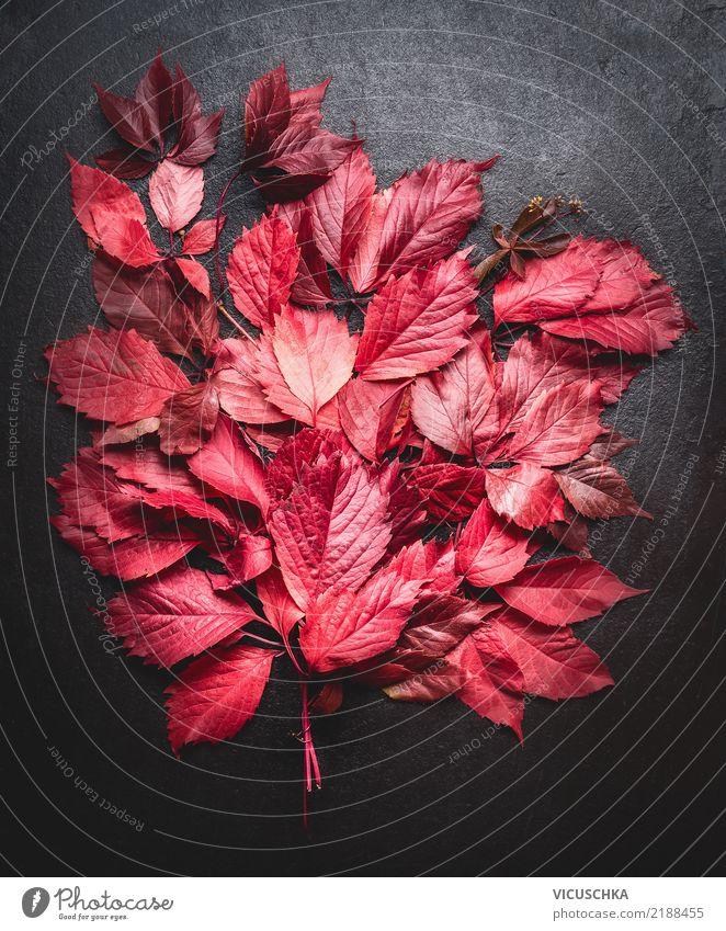 Rote Herbstblätter Stilleben Design Dekoration & Verzierung Natur Pflanze Blatt Blumenstrauß gelb Hintergrundbild November September Stillleben Oktober rot