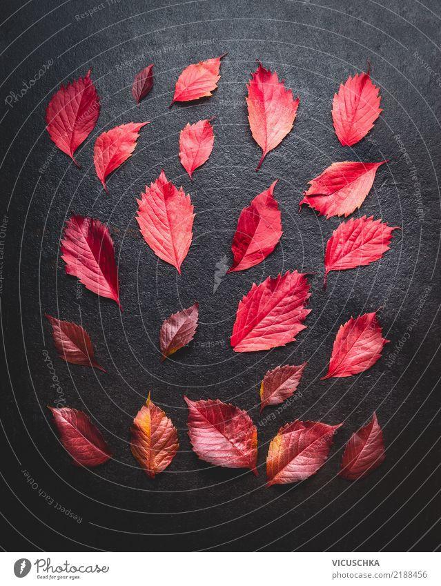 Layout mit roten HerbstBlätter Stil Design Dekoration & Verzierung Natur Pflanze Blatt Zeichen Hintergrundbild Stillleben dunkel Entwurf Farbfoto Innenaufnahme