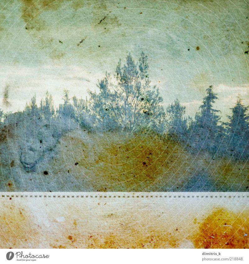 verfärbter Wald Natur Landschaft Pflanze Baum Papier alt verblüht dreckig natürlich retro Verfall Ast Niederlassungen laublos verblassend Quadrat Grunge gefärbt