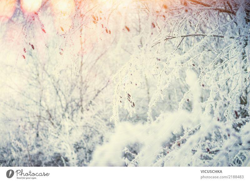 Winter Natur Hintergrund Ferien & Urlaub & Reisen Pflanze Weihnachten & Advent Baum Landschaft Lifestyle Hintergrundbild Schnee Gras Garten Design Park