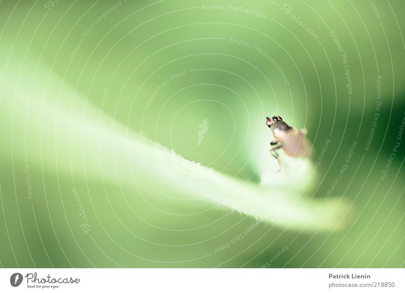 Fliegenperspektive Natur grün Pflanze Sommer Blatt Tier Wiese träumen Luft warten Fliege Umwelt fliegen Flügel beobachten leuchten