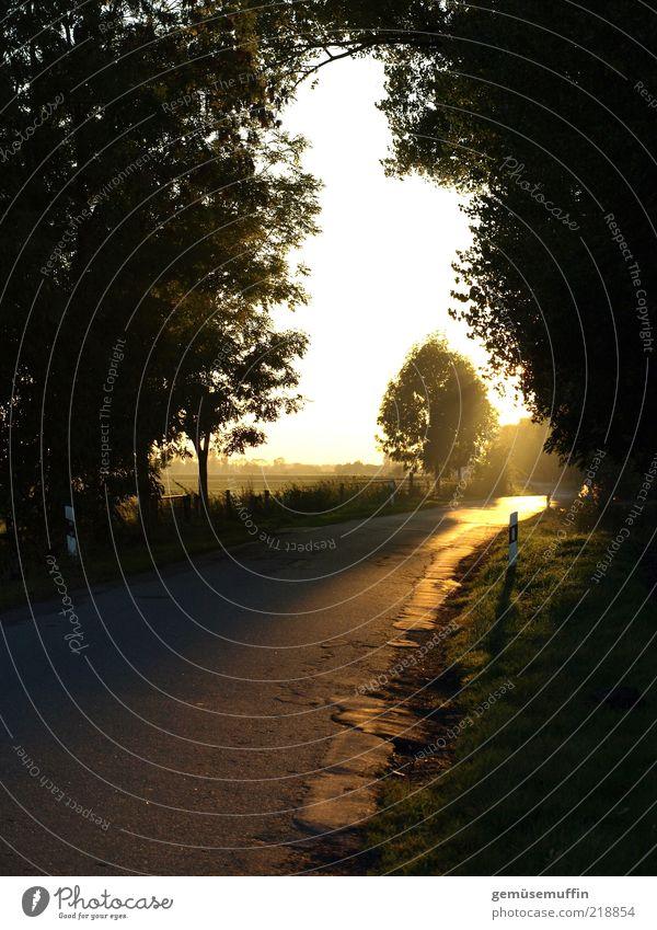 Straßengold Natur Himmel Baum Pflanze Einsamkeit Ferne Straße Farbe Herbst Wege & Pfade Luft Zufriedenheit hell Umwelt gold Hoffnung