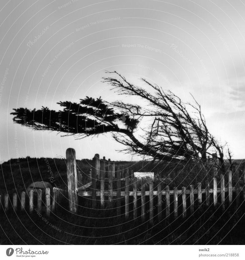 Windig heute Umwelt Natur Pflanze Himmel Wolken Horizont Klima Wetter Sturm Baum Gras Sträucher Mårup Jütland Nordeuropa Norden Ferne Ausland Fischerdorf