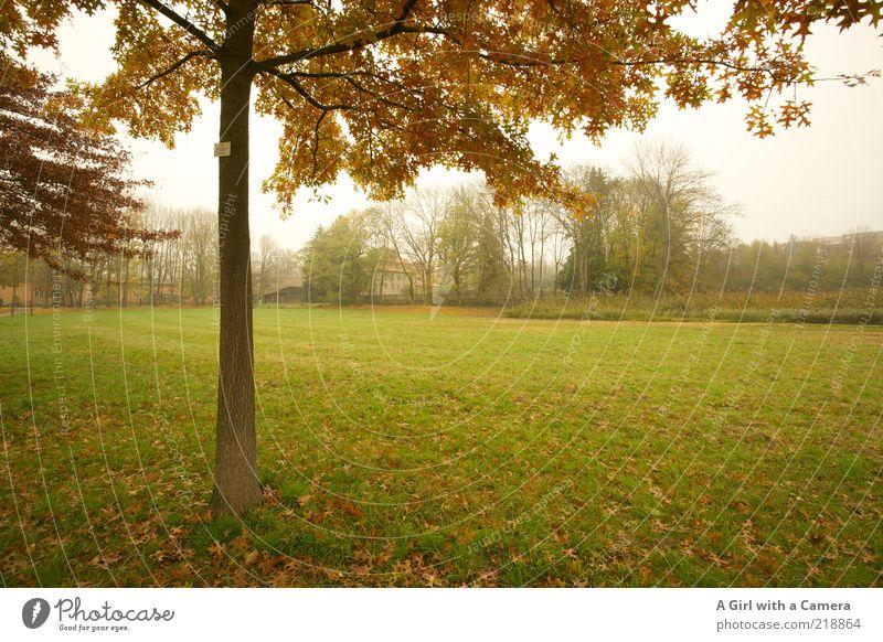 Im Nebelpark Umwelt Natur Landschaft Herbst schlechtes Wetter Baum Gras Park träumen authentisch dunkel kalt braun grün Idylle Blatt Laubbaum