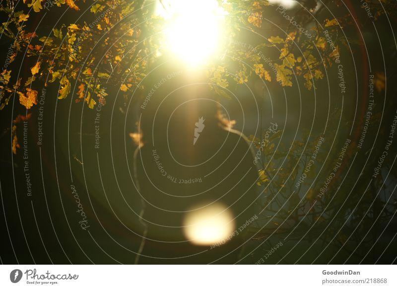Der Sonne trotzen IV Mensch feminin 1 Umwelt Natur Schönes Wetter kalt schön Freiheit hell Herbst Farbfoto Außenaufnahme Dämmerung Licht Schatten Kontrast