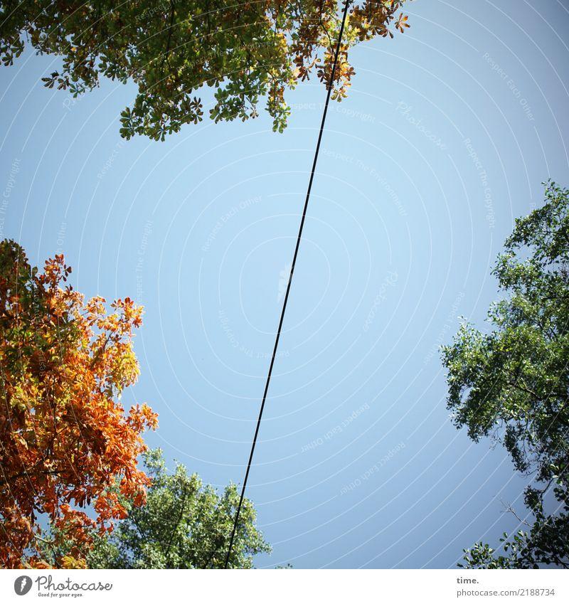skyline Energiewirtschaft Hochspannungsleitung Kabel nur Himmel Herbst Schönes Wetter Baum Blatt Baumkrone hoch selbstbewußt Leben Ausdauer Bewegung