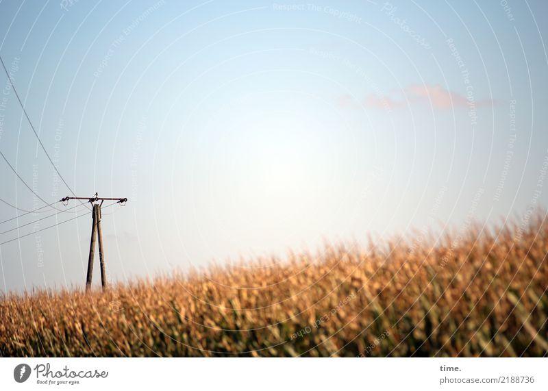 Stromwende Himmel Pflanze Wärme Wege & Pfade Lebensmittel Stimmung Feld Energiewirtschaft ästhetisch Technik & Technologie Perspektive Schönes Wetter