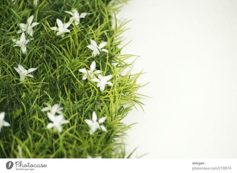 Mother Nature |That green old Slut Pflanze natürlich Rasen Wiese Frühling Am Rand Grenze Blume Blüte Jahreszeiten geteilt kalt Sommer Frühlingsblume Wachstum