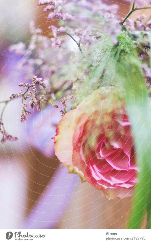 nur ein Hauch harmonisch Duft Feste & Feiern Hochzeit Rose Dekoration & Verzierung Blumenstrauß Schleife positiv weich violett rosa Gefühle Romantik Glück