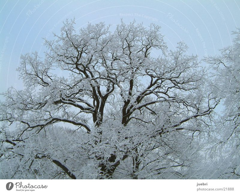 Vereister Baum horizontal Baum Schnee Eis Graffiti horizontal