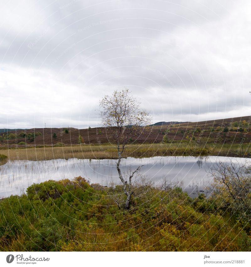 trist Ferne Freiheit Natur Landschaft Wasser Himmel Wolken Herbst Schönes Wetter Regen Baum Sträucher Hügel Seeufer Moor Sumpf Loch Ness Schottland Menschenleer