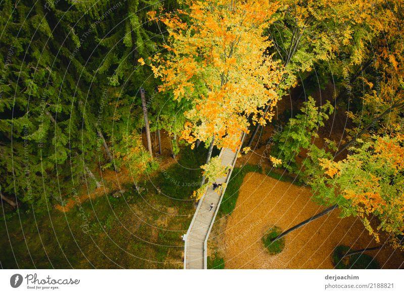 von oben Freude Erholung Ausflug Umwelt Natur Herbst Schönes Wetter Baum Wald Holz beobachten entdecken genießen Blick außergewöhnlich fantastisch schön Glück