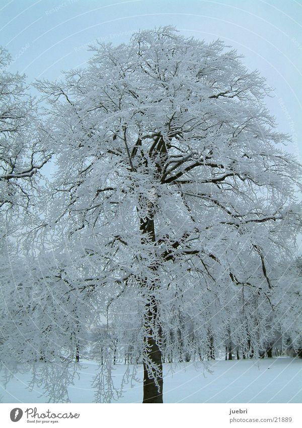 Vereister Baum vertikal Schnee Eis Graffiti