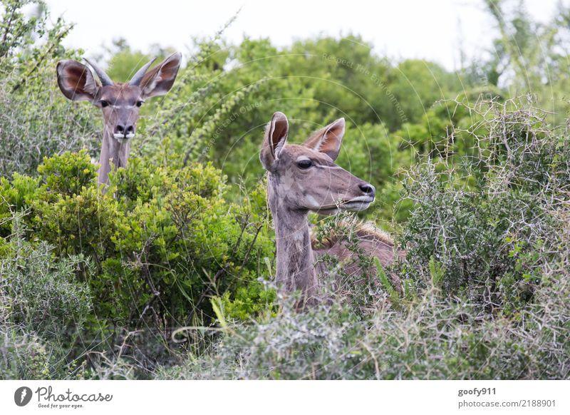 Hallo wir sind Nr.200 Natur Ferien & Urlaub & Reisen Pflanze Sommer Landschaft Tier Blatt Ferne Umwelt Frühling Gras Tourismus Ausflug Tierpaar Wildtier