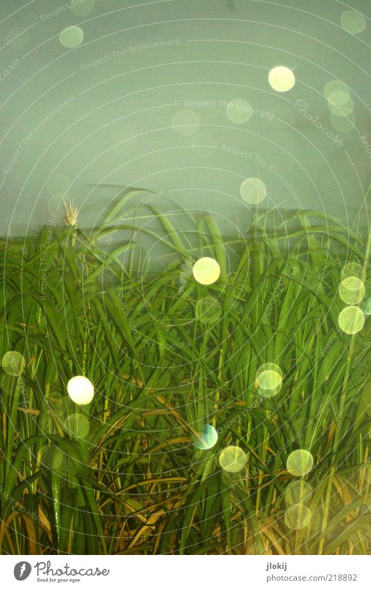 Blitzregen Himmel Natur Wasser grün blau Pflanze Gras grau Regen nass Wassertropfen Licht schlechtes Wetter Bewegungsunschärfe Grünpflanze