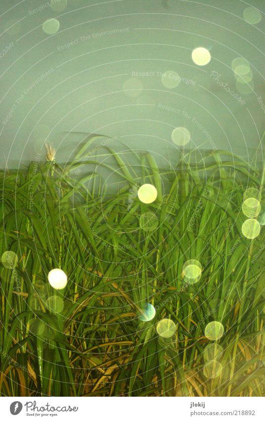 Blitzregen Natur Pflanze Wasser Wassertropfen Himmel schlechtes Wetter Regen Grünpflanze nass blau grau grün Farbfoto mehrfarbig Außenaufnahme Dämmerung