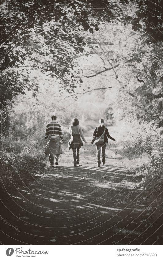 Weisst du noch damals ? Mensch Natur Jugendliche Baum Pflanze Sommer Blatt Erwachsene Freiheit Freundschaft Zusammensein wandern maskulin Ausflug 18-30 Jahre