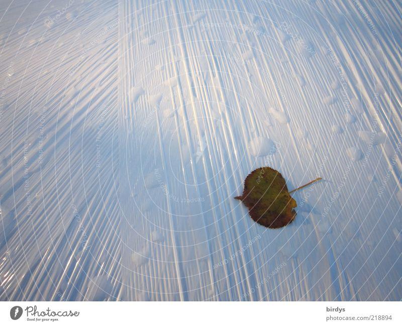 Ein einsames Blatt Kunststoffverpackung ästhetisch außergewöhnlich hell grün weiß Folie Falte Hintergrund neutral Herbst Wassertropfen Licht nass Kontrast