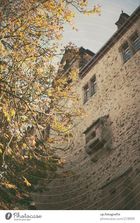 The same procedure as every year Natur Baum Pflanze Herbst Gebäude Burg oder Schloss Bauwerk Schönes Wetter Sehenswürdigkeit