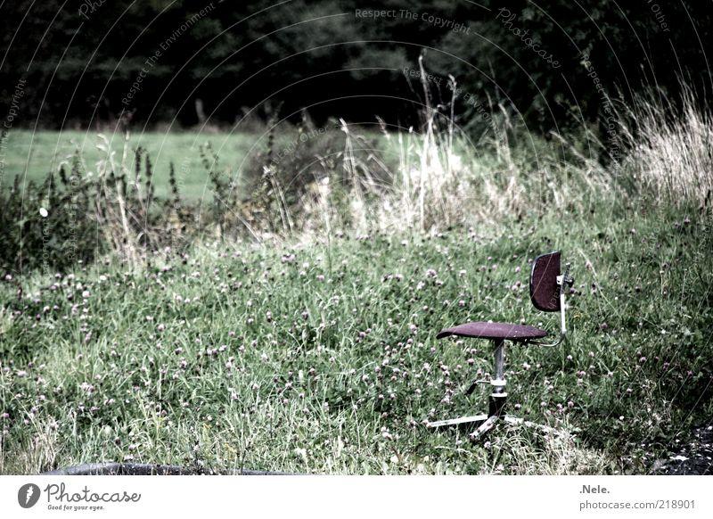 ein drehstuhl. Natur Pflanze Gras Sträucher Drehstuhl Stuhl Erholung Stimmung ruhig standhaft Einsamkeit Gedeckte Farben Außenaufnahme Menschenleer