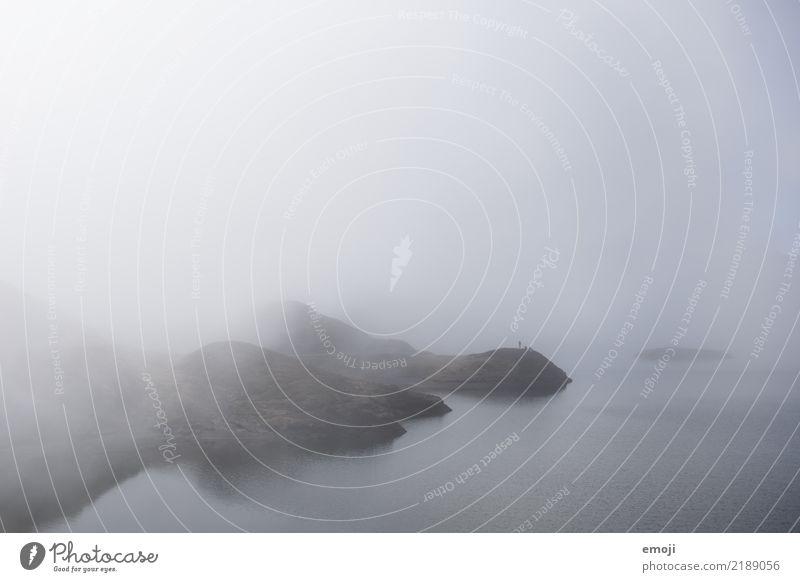 Tannensee Umwelt Natur Landschaft Herbst schlechtes Wetter Nebel Wiese See dunkel trist grau Traurigkeit Farbfoto Gedeckte Farben Außenaufnahme