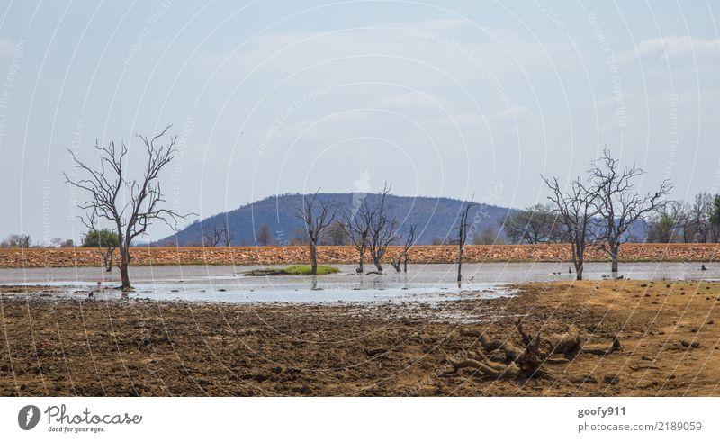 Ein bisschen Wasser..... Ferien & Urlaub & Reisen Tourismus Ausflug Abenteuer Ferne Freiheit Safari Expedition Sommer Umwelt Natur Landschaft Pflanze Tier Erde
