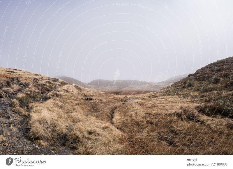 Alpenwüste Umwelt Natur Landschaft Herbst schlechtes Wetter Nebel Wiese dunkel trist grau Wüste Traurigkeit Farbfoto Gedeckte Farben Außenaufnahme