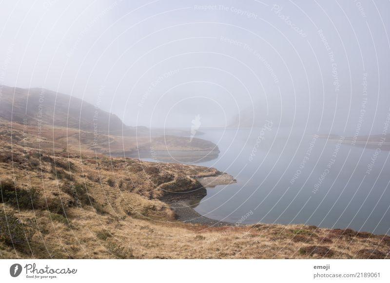 Tannensee Umwelt Natur Landschaft Herbst schlechtes Wetter Nebel Wiese See dunkel trist grau Fischer Traurigkeit Farbfoto Gedeckte Farben Außenaufnahme