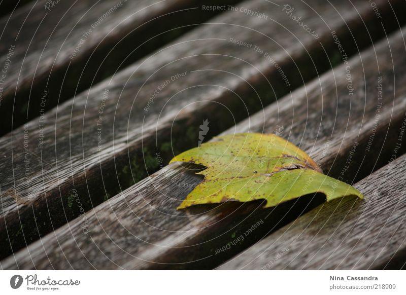 Herbst Natur schön grün ruhig Blatt Einsamkeit gelb Leben kalt Erholung Holz Traurigkeit Stimmung braun
