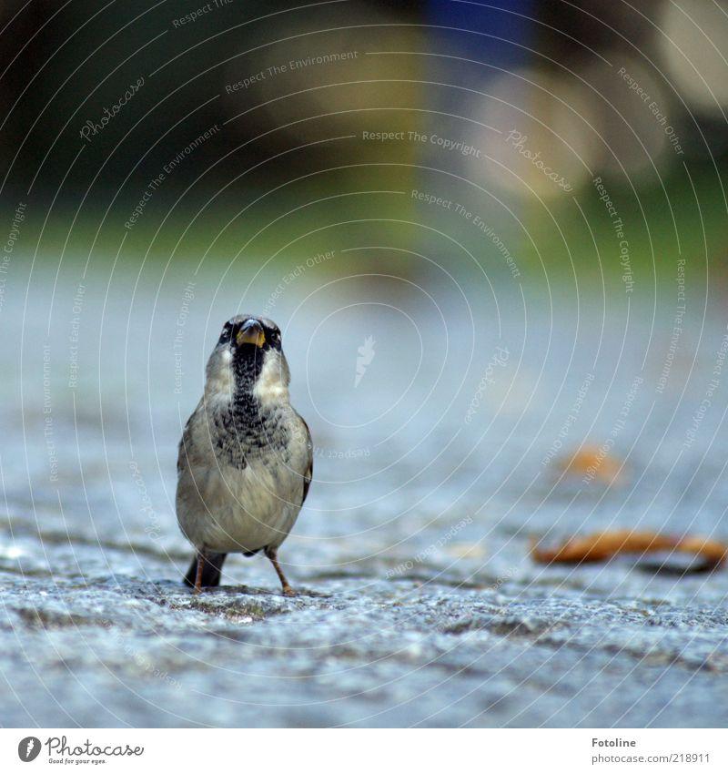 Haste ma nen Krümel Brot oder nen bissel Waffel? Natur Tier Vogel klein Umwelt Feder Tiergesicht natürlich Wildtier niedlich Schnabel frech Spatz
