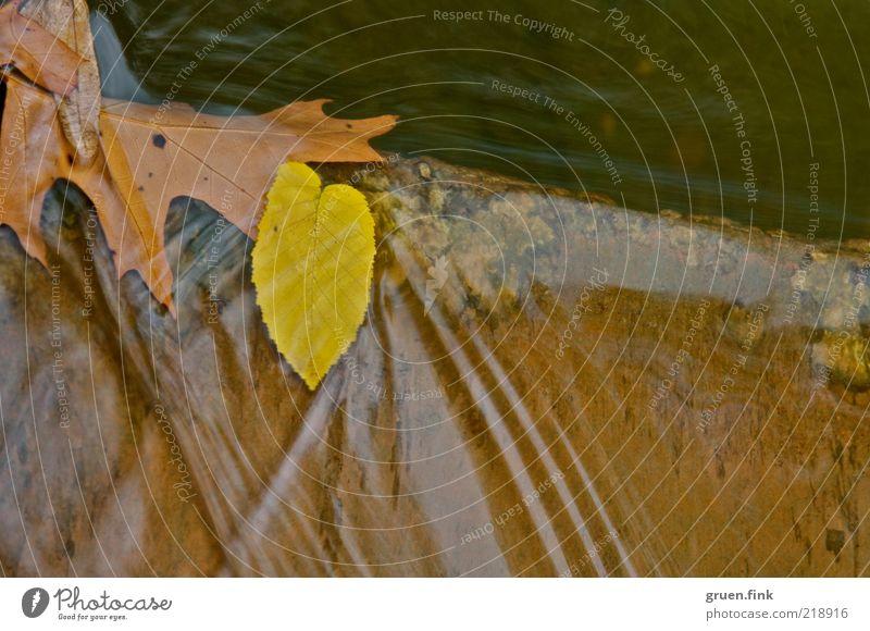 herbst im fluss Natur Wasser Pflanze ruhig Blatt gelb Herbst Bewegung Stein braun Wellen elegant ästhetisch Fluss Flüssigkeit fließen