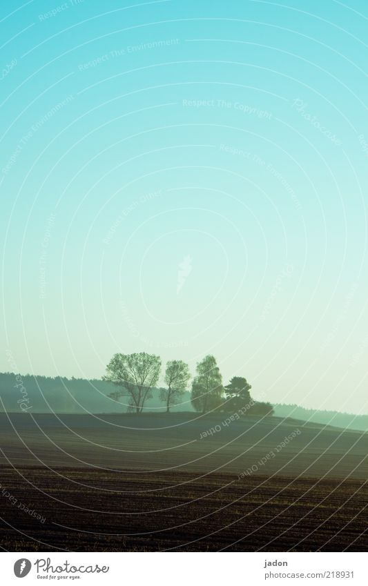 früh am morgen Ferne Freiheit Landschaft Erde Wolkenloser Himmel Herbst Nebel Baum Feld Wald Hügel ruhig Stimmung Wäldchen Morgennebel Landwirtschaft Einsamkeit
