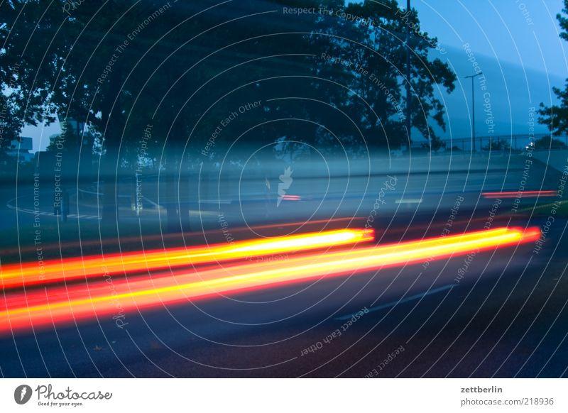 Tempo Baum Straße Geschwindigkeit fahren Verkehrswege Dynamik Autofahren Abenddämmerung Scheinwerfer Allee Bewegung Verkehrsmittel Leuchtspur Langzeitbelichtung