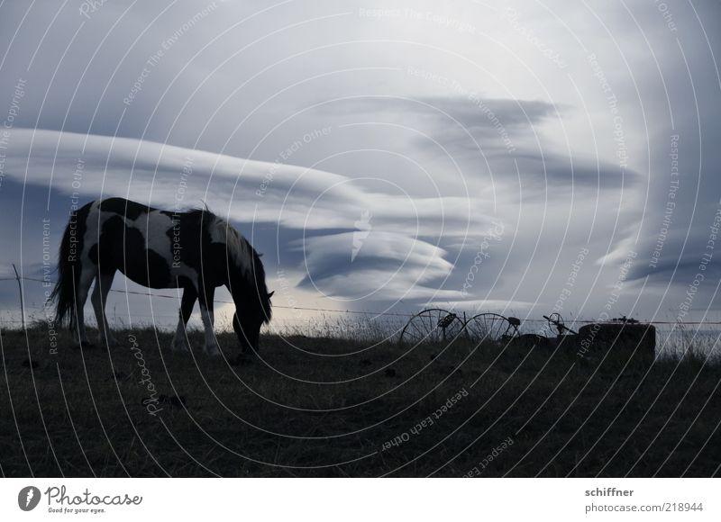 Wolkenpferd ruhig Einsamkeit Tier dunkel kalt Stimmung Pferd ästhetisch weich Sehnsucht Island Fressen Fernweh Haustier schlechtes Wetter