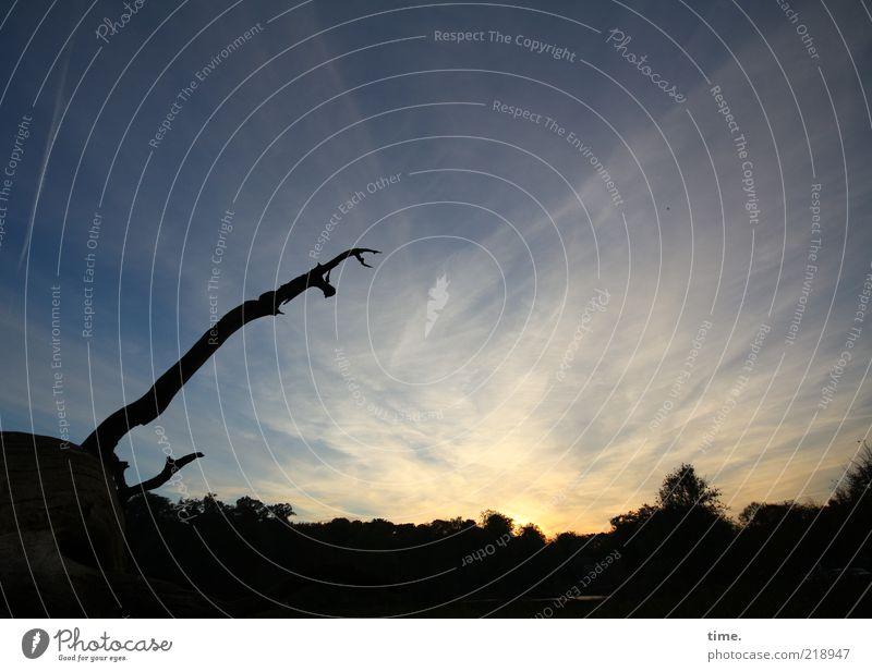 Kletterbaum vor Abendlicht ruhig Natur Himmel Wolken Baum Wald dunkel blau schwarz Abenddämmerung Totholz Sonnenuntergang Baumstamm Farbfoto Außenaufnahme