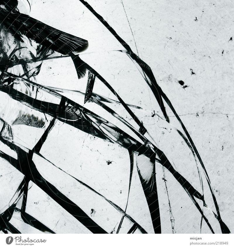 Distortion |Crystal Butterfly schön schwarz Linie Glas kaputt Schutz Gewalt Kunst gebrochen Material Fenster Riss brechen Zerstörung zerbrechlich Bogen