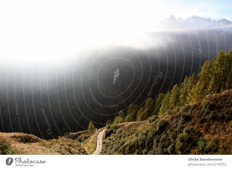 Hochnebel Nebel Berge u. Gebirge Alpen Berghang Tal Passeier Timmelsjoch Italien Südtirol Dunst Sonnenlicht Morgen Wald Tanne Baum Herbst mehrfarbig Straße