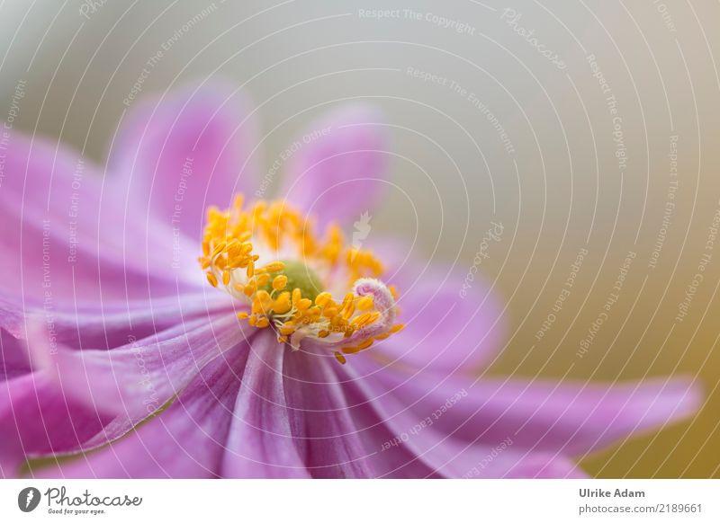 Herbst Anemone Design harmonisch Wohlgefühl Zufriedenheit Erholung ruhig Meditation einrichten Dekoration & Verzierung Tapete Natur Pflanze Sommer Blume Blüte