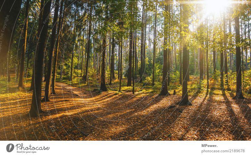 herbstwald Umwelt Natur Landschaft Herbst Schönes Wetter Baum Wald Stimmung Fußweg Blatt Laubwald Blendenfleck Mischwald Farbenwelt Farbfoto Außenaufnahme